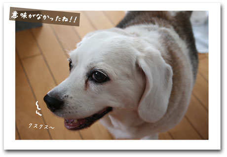 1_20100716123141.jpg