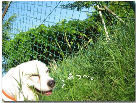 1_20100718175952.jpg
