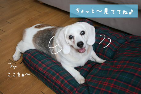1_20100721164257.jpg