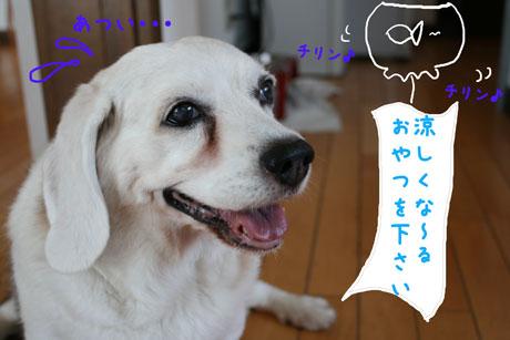1_20100724171020.jpg