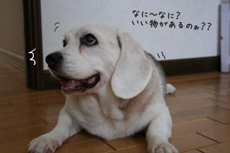 1_20100727114219.jpg