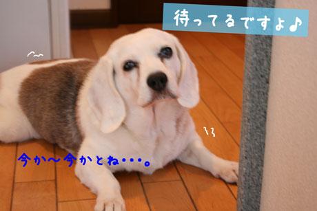 1_20100910151500.jpg