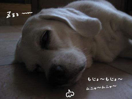 1_20100912115419.jpg