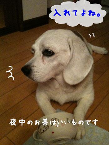 1_20100914114605.jpg