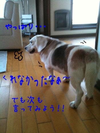 1_20100915113246.jpg