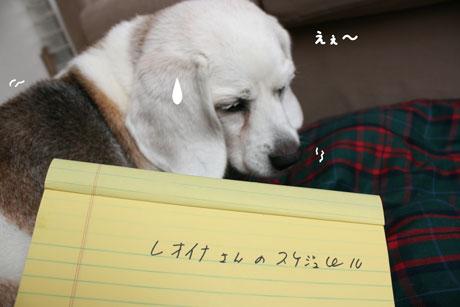 1_20100918140813.jpg