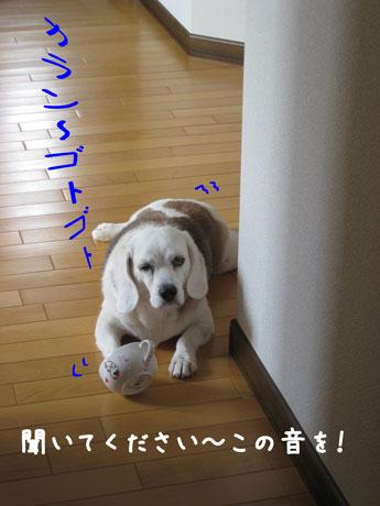 1_20100921144626.jpg