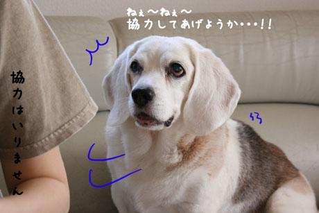 1_20100925134117.jpg