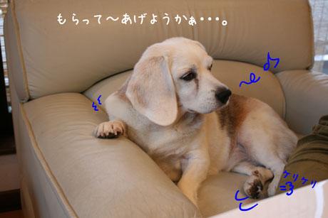 1_20101010221912.jpg