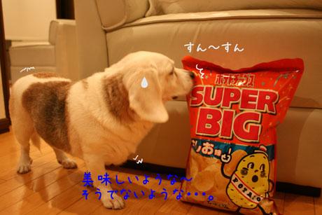 1_20101013110118.jpg