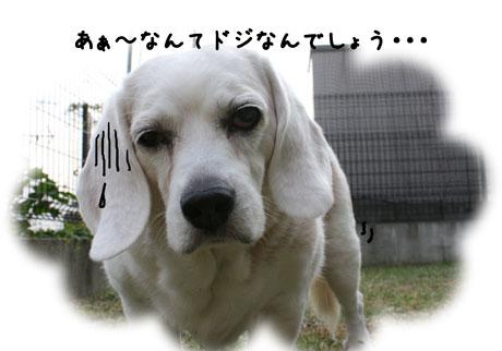 1_20101017182823.jpg