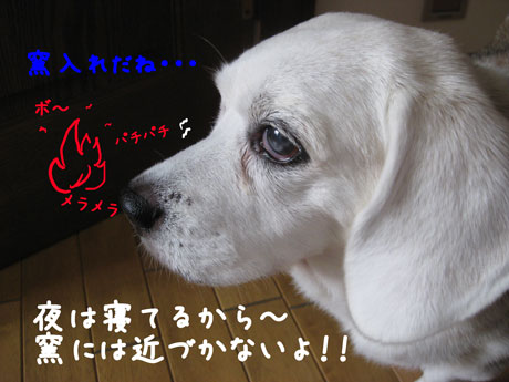 1_20101023162027.jpg