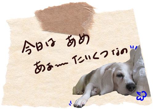 1_20101025141031.jpg