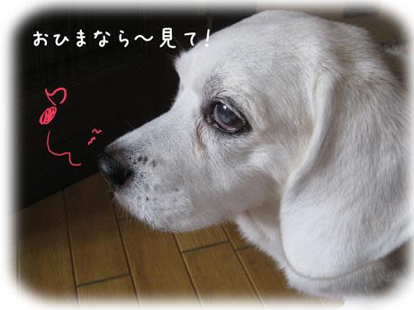 1_20101026000116.jpg