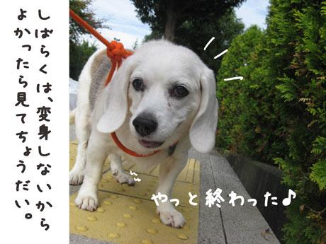 1_20101030180325.jpg