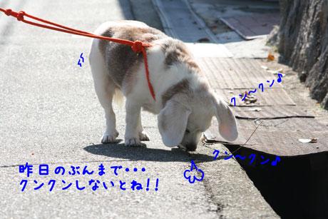 1_20101104151217.jpg