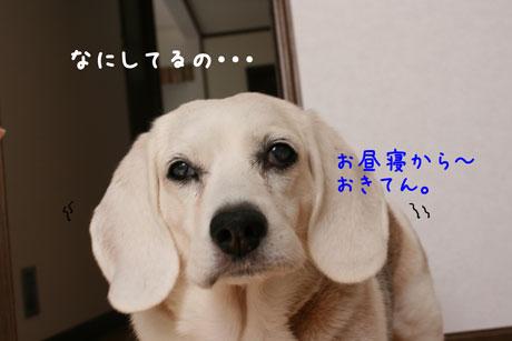 1_20101110150445.jpg