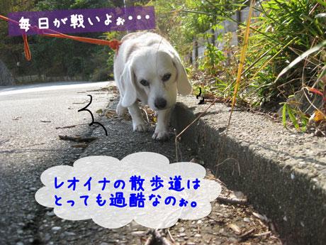 1_20101111144535.jpg