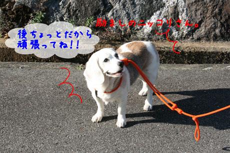 1_20101120152748.jpg