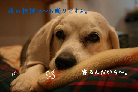 1_20101124212849.jpg