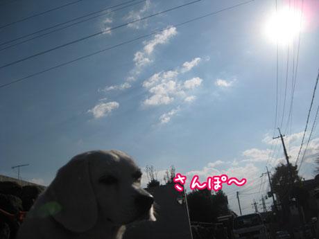 1_20101126145212.jpg