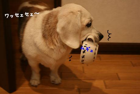 1_20101203200101.jpg