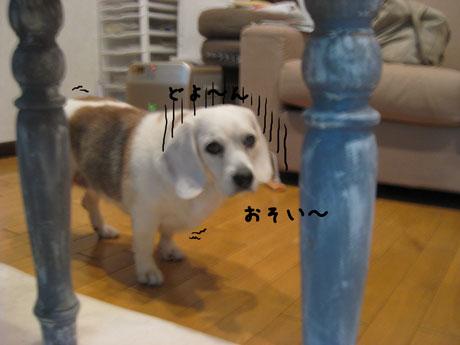 1_20101208215330.jpg