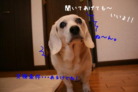 1_20101216154020.jpg