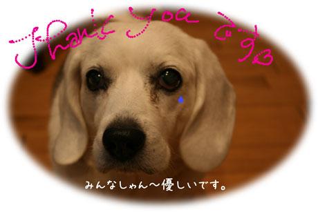 1_20101218171946.jpg