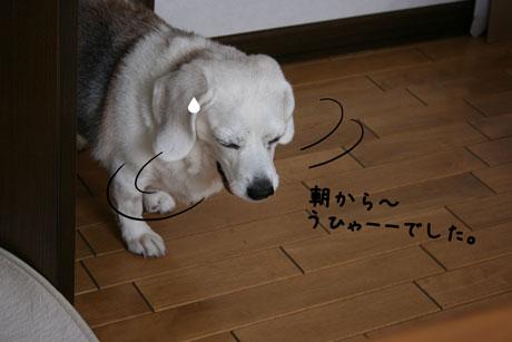 1_20101219181309.jpg