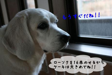 1_20110104171314.jpg