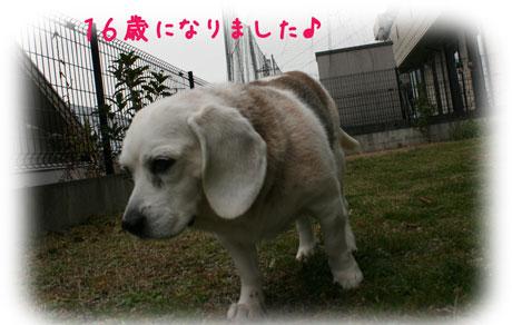 1_20110105170856.jpg