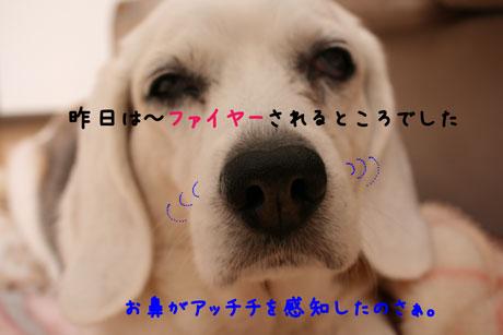 1_20110106155326.jpg