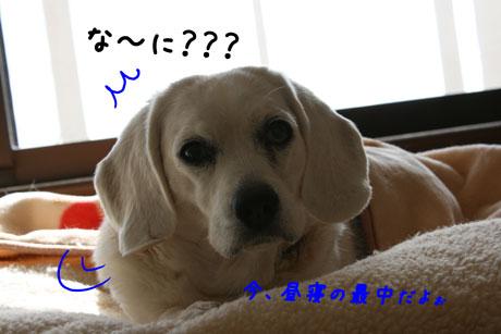 1_20110107115618.jpg