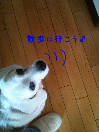 1_20110108204543.jpg