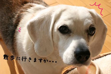 1_20110119180209.jpg