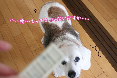 1_20110123175345.jpg