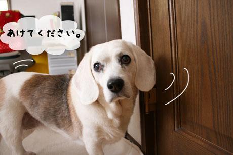 1_20110128170800.jpg