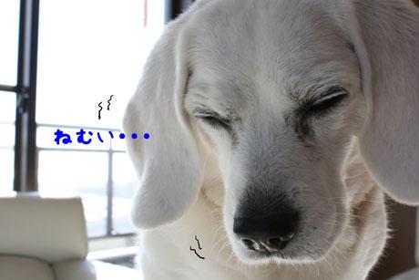 1_20110130155039.jpg
