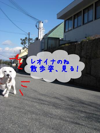 1_20110131233944.jpg