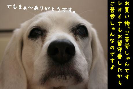 1_20110205150037.jpg