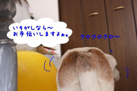 1_20110207155111.jpg
