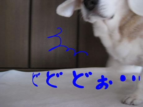 1_20110209151237.jpg