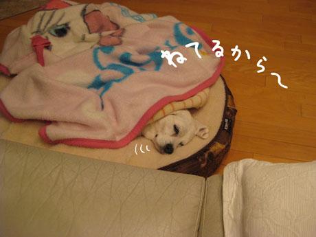 1_20110210213131.jpg