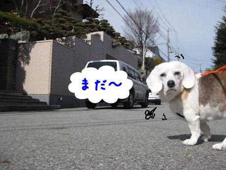 1_20110219144137.jpg