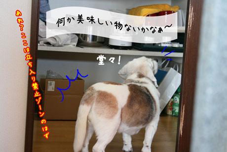 1_20110227144111.jpg