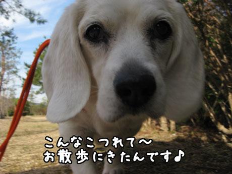 1_20110305163453.jpg