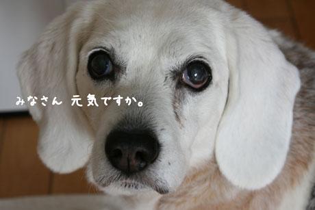 1_20110314111239.jpg