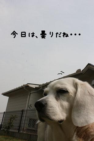 1_20110315144429.jpg