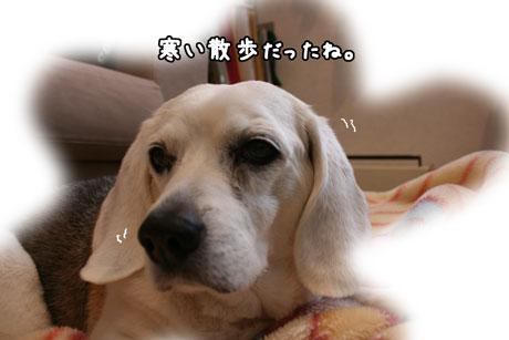 1_20110317140305.jpg